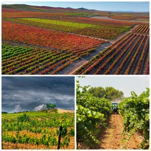 Guided walks to the vineyards